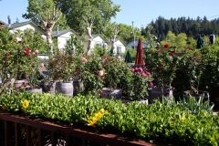 russian-river-hotel-the-woods-cottages-cabins-09